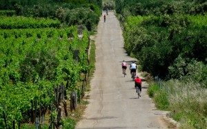 Croatia vineyard bike ride